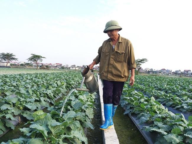 Sau chuyển đổi, đất Thái Bình có thêm nhiều triệu phú trồng rau an toàn - Ảnh 3.