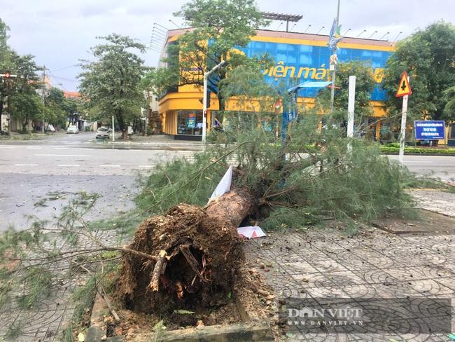 Hậu quả bão số 13 ở Quảng Bình: 8 người bị thương nặng, trường học, trạm y tế tốc mái  - Ảnh 6.
