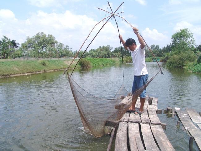 Vỡ mộng làm giàu từ nghề ương cá tra giống, nông dân Đồng Tháp Mười đồng loạt đổ tiền lấp ao trồng lại lúa - Ảnh 3.
