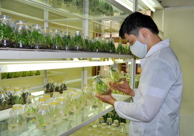Tìm nhân lực làm nông nghiệp công nghệ cao - Ảnh 1.