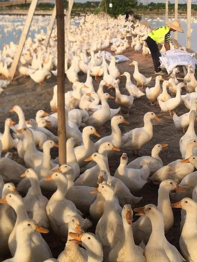 Giá gia cầm hôm nay 18/11: Nhiều người nuôi gà, vịt vỡ nợ, có chủ trại nuôi gà kiểu này vẫn lãi đậm - Ảnh 3.