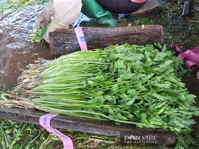 """Hà Nội: Ở xã này trồng thứ rau gì mà mỗi ngày cắt bán hàng tạ, nông dân """"bỏ túi"""" tiền triệu. - Ảnh 4."""