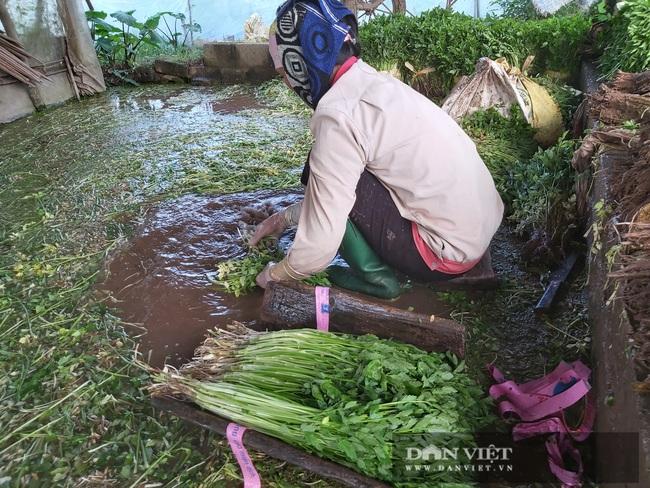 """Hà Nội: Ở xã này trồng thứ rau gì mà mỗi ngày cắt bán hàng tạ, nông dân """"bỏ túi"""" tiền triệu. - Ảnh 6."""