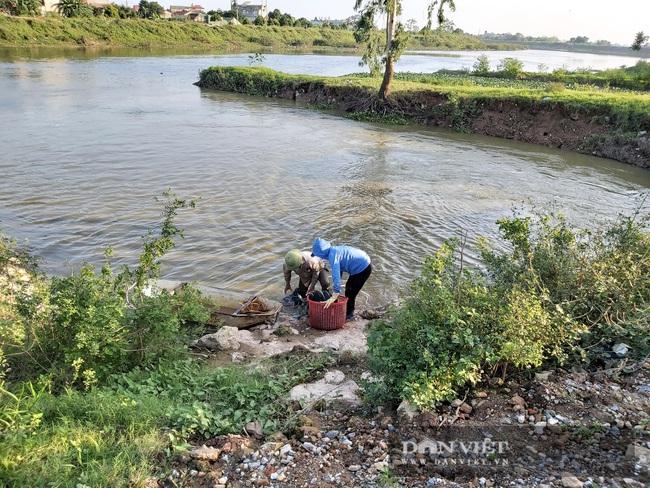 Hà Nội: Cho ba ba gai sống chung với cá chuối hoa, ông nông dân này nuôi nhàn tênh, bán giá nửa triệu đồng/kg - Ảnh 2.