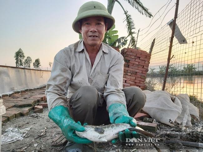 Hà Nội: Cho ba ba gai sống chung với cá chuối hoa, ông nông dân này nuôi nhàn tênh, bán giá nửa triệu đồng/kg - Ảnh 10.