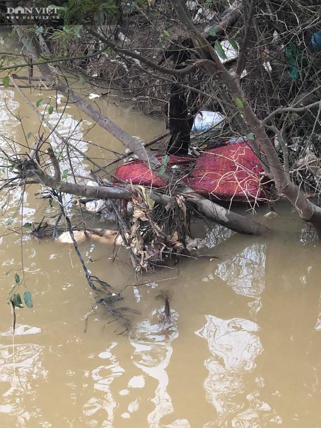 TT-Huế: Hãi hùng hàng loạt xác lợn đang phân hủy nổi ven sông gần lò mổ  - Ảnh 6.