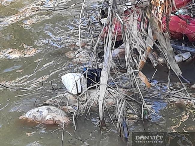 TT-Huế: Hãi hùng hàng loạt xác lợn đang phân hủy nổi ven sông gần lò mổ  - Ảnh 7.
