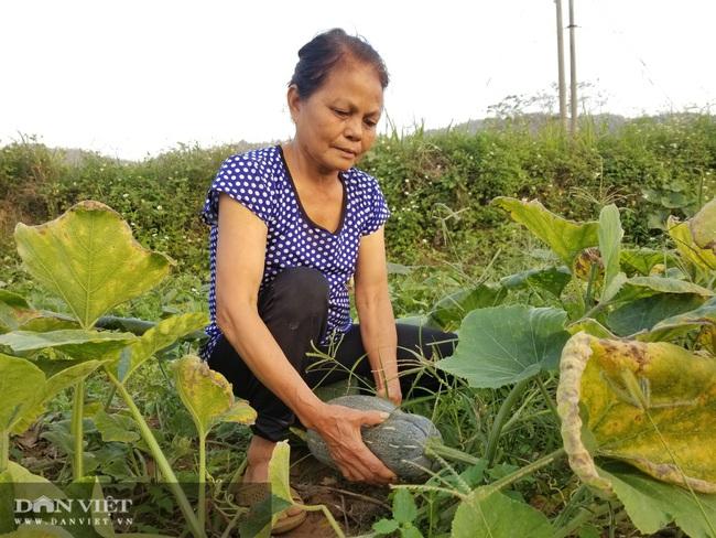 Nông dân xứ Lạng trồng bí đỏ tăng thu nhập và cải thiện dinh dưỡng - Ảnh 1.