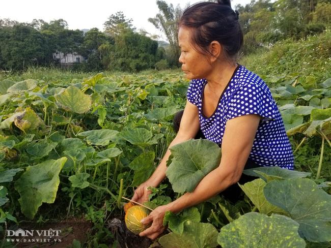 Nông dân xứ Lạng trồng bí đỏ tăng thu nhập và cải thiện dinh dưỡng - Ảnh 3.