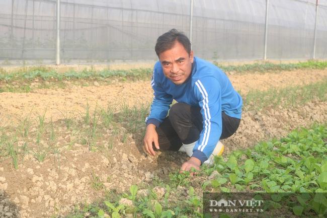 Từ Cộng hòa Séc trở về, 7X quê Thanh Hóa xây dựng vùng sản xuất rau, quả VietGAP - Ảnh 1.