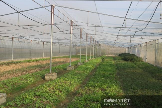Từ Cộng hòa Séc trở về, 7X quê Thanh Hóa xây dựng vùng sản xuất rau, quả VietGAP - Ảnh 3.