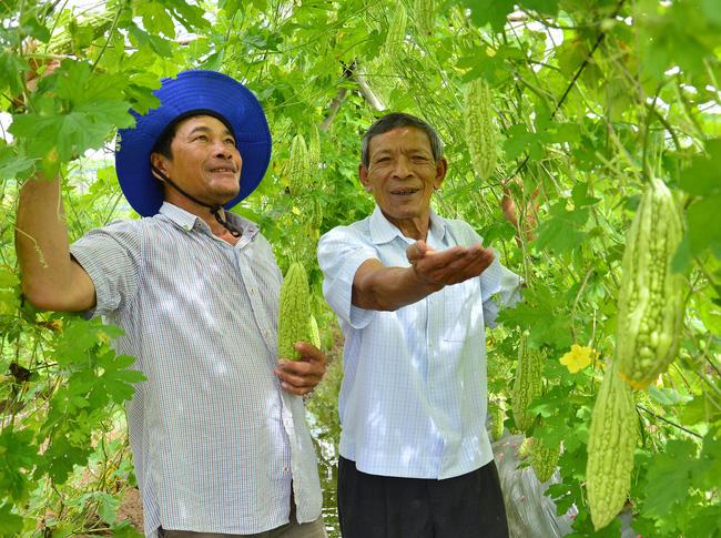 Chi hội trưởng U70 vẫn nhiệt tình lội ruộng, băng rẫy cùng nông dân - Ảnh 1.