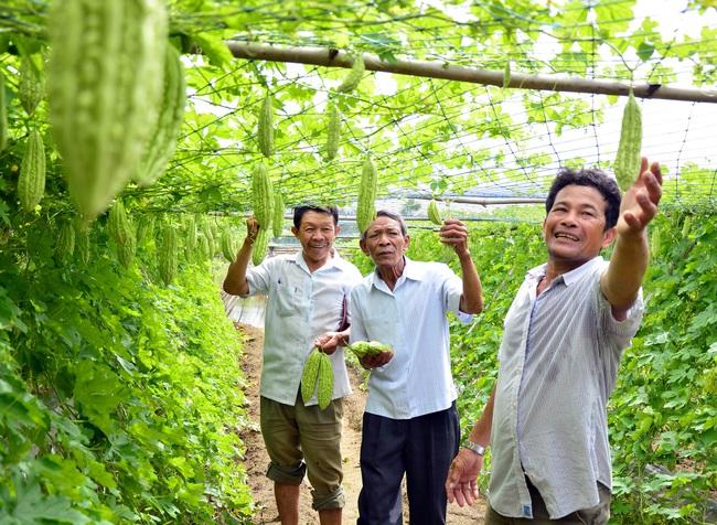 Chi hội trưởng U70 vẫn nhiệt tình lội ruộng, băng rẫy cùng nông dân - Ảnh 2.