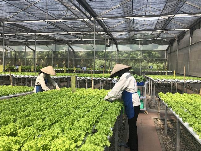 Nông nghiệp đất mỏ bứt phá từ công nghệ - Ảnh 1.