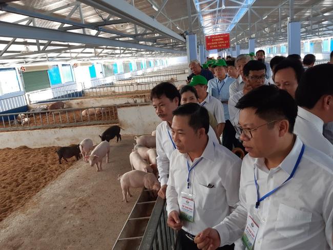 Nhận thức đúng, sản xuất nông nghiệp hữu cơ đạt kết quả cao