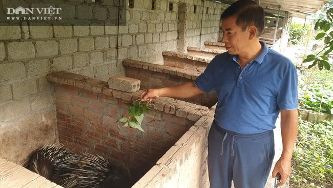 Thái Bình: Nuôi nhím, lợn rừng, đại tá về hưu kiếm hàng trăm triệu đồng mỗi năm  - Ảnh 1.