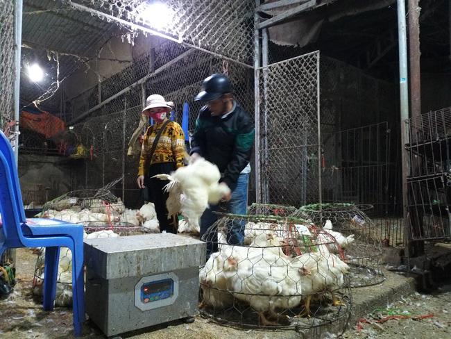 """Giá gia cầm hôm nay 25/11: Giá gà thịt công nghiệp quay đầu giảm nhẹ, người nuôi """"rơi"""" cả trăm triệu đồng sau một đêm - Ảnh 1."""