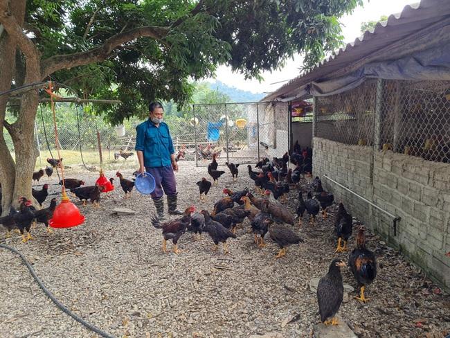 Điện Biên: Thầy giáo mát tay nuôi gà, trồng cây ăn quả thu vài trăm triệu mỗi năm - Ảnh 1.