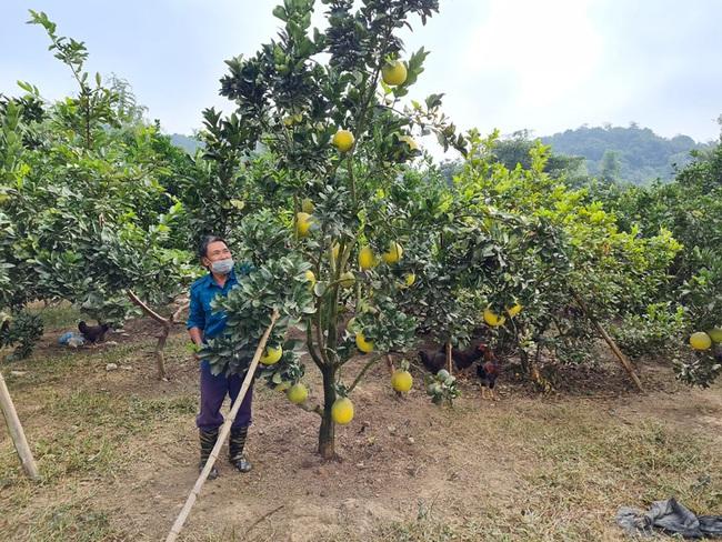 Điện Biên: Thầy giáo mát tay nuôi gà, trồng cây ăn quả thu vài trăm triệu mỗi năm - Ảnh 5.