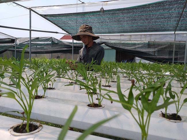 Quảng Nam: Thêm 78 doanh nghiệp đầu tư vào nông nghiệp, nông thôn - Ảnh 1.