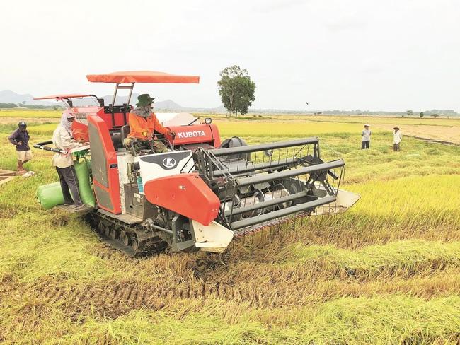 Dân Việt - 10 năm một sứ mệnh: Phụng sự nông dân Việt Nam - Ảnh 1.
