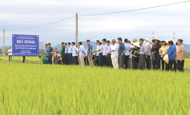 Trên 2 triệu ha áp dụng IPM, Bộ NNPTNT ban hành chỉ thị mở rộng triển khai trên các cây trồng chủ lực - Ảnh 2.