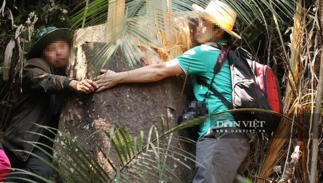 Vụ rừng bạch tùng trăm tuổi bị cưa hạ, tỉnh Lâm Đồng chỉ đạo khẩn - Ảnh 3.