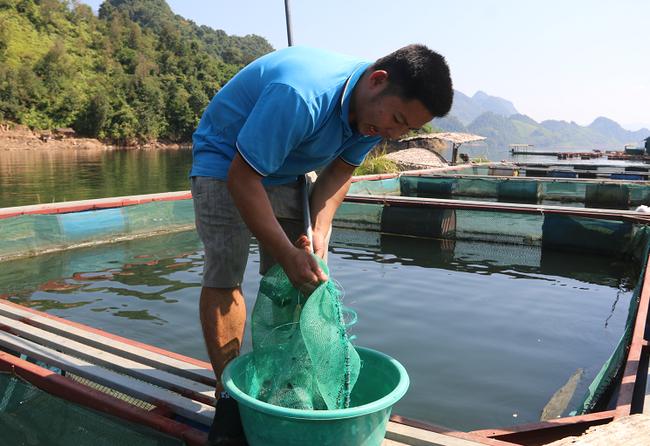 Nông dân Quỳnh Nhai khấm khá nhờ nghề nuôi cá lồng - Ảnh 7.