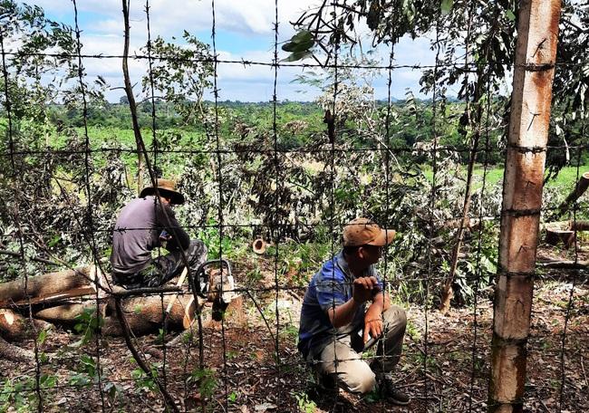 """Phá hơn 200 cây xanh trong KCN, lãnh đạo công ty nói """"dọn dẹp để trả lại mặt bằng"""" - Ảnh 1."""