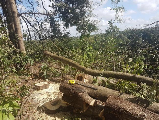 """Phá hơn 200 cây xanh trong KCN, lãnh đạo công ty nói """"dọn dẹp để trả lại mặt bằng"""" - Ảnh 3."""