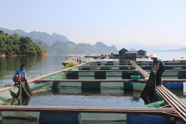 Nông dân Quỳnh Nhai khấm khá nhờ nghề nuôi cá lồng - Ảnh 6.