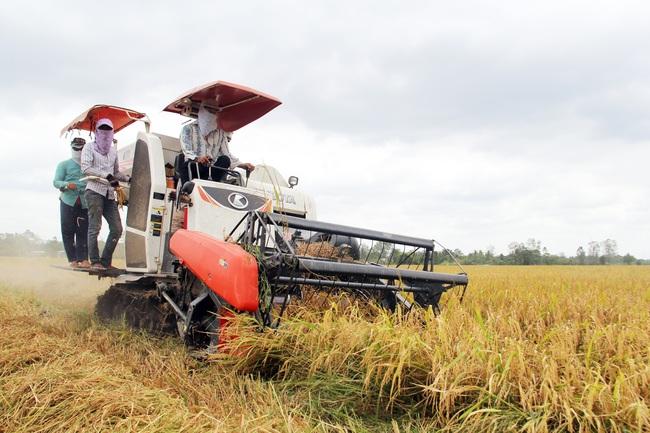 Vì sao Thủ tướng chỉ đạo kiểm tra mô hình cánh đồng lớn ở ĐBSCL? - Ảnh 1.