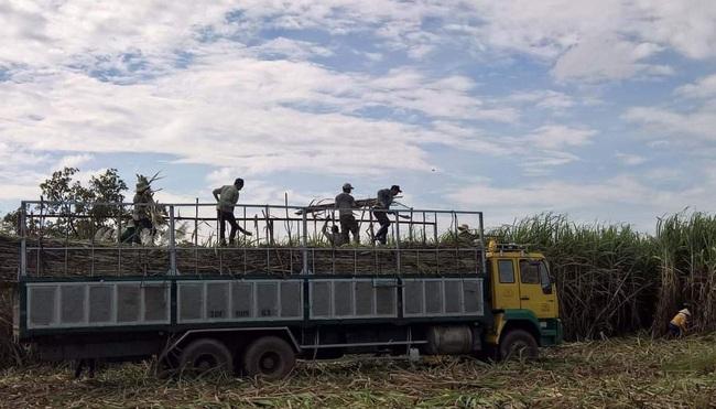 """Sau gần nột năm ATIGA có hiệu lực:  Khó khăn kép khiến ngành mía đường """"hụt hơi"""" - Ảnh 1."""