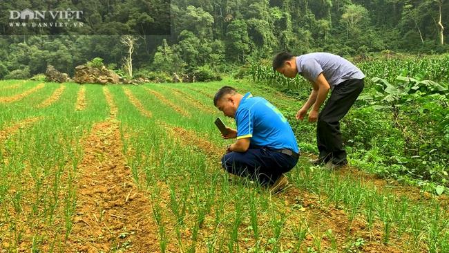 Tránh để phí đất, nông dân Bắc Kạn mang loài cây này về trồng, có thêm thu nhập, không lo đầu ra - Ảnh 2.