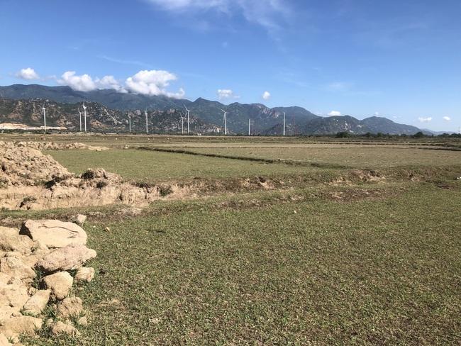 Ninh Thuận: Thu hồi đất nhiều hecta đất nông nghiệp làm khu công nghiệp rồi bỏ hoang hàng chục năm qua  - Ảnh 1.