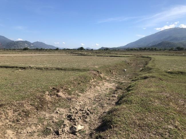 Vì sao hàng nghìn hecta đất nông nghiệp ở các tỉnh Nam Trung bộ bỏ hoang? Bài 2: Tỉnh Ninh Thuận nói gì? - Ảnh 2.