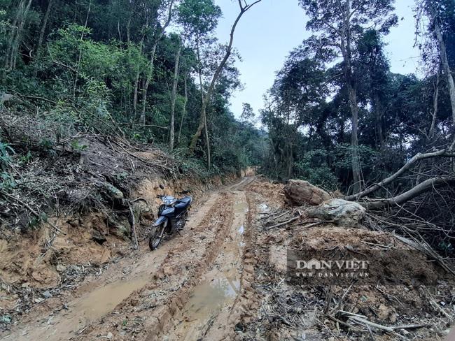Bắc Kạn: Mở đường phá rừng tự nhiên trái phép quy mô lớn  - Ảnh 3.