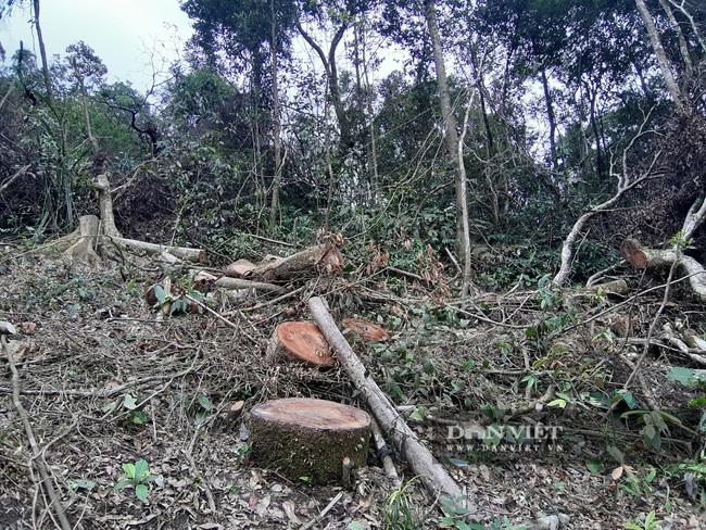 Bắc Kạn: Mở đường phá rừng tự nhiên trái phép quy mô lớn  - Ảnh 2.