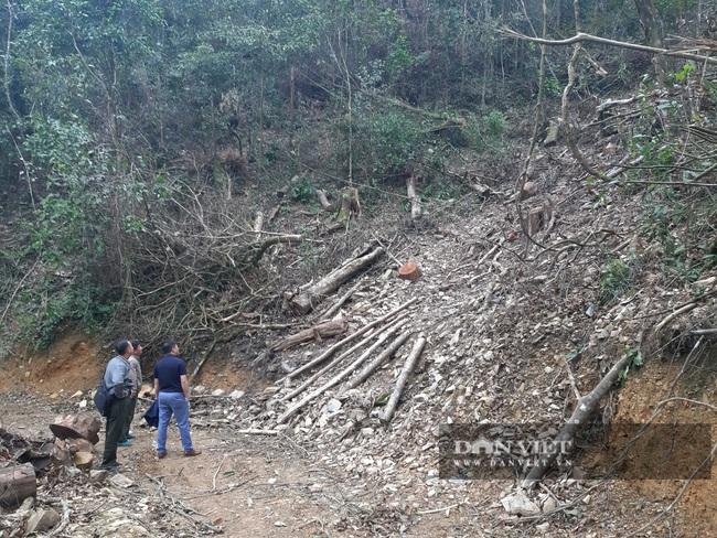 Bắc Kạn: Mở đường phá rừng tự nhiên trái phép quy mô lớn  - Ảnh 6.