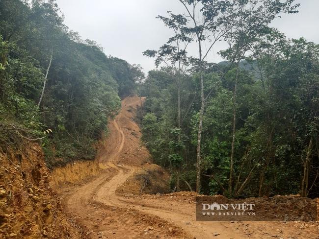 Mở 2,4km đường trái phép vào phá rừng tự nhiên ở Bắc Kạn: Giao Công an điều tra vụ việc - Ảnh 2.