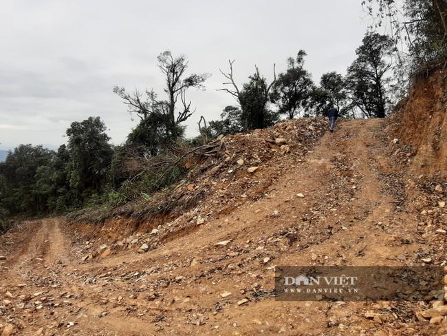 Mở 2,4km đường trái phép vào phá rừng tự nhiên ở Bắc Kạn: Giao Công an điều tra vụ việc - Ảnh 4.