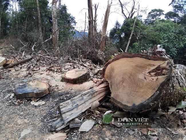 Mở 2,4km đường trái phép vào phá rừng tự nhiên ở Bắc Kạn: Giao Công an điều tra vụ việc - Ảnh 5.