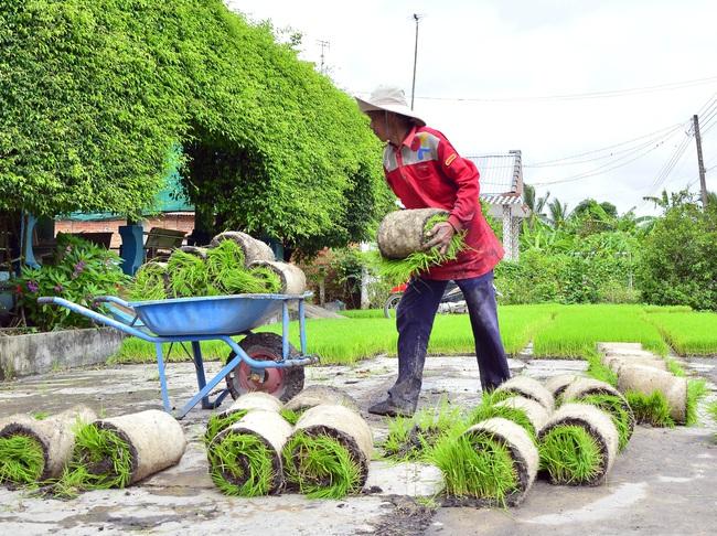 Kiên Giang: Cơ giới hóa mở lối cho nông dân tăng thu nhập - Ảnh 3.