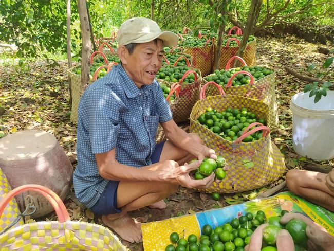 Chi hội trưởng giúp cả làng no ấm từ cây chanh trái vụ - Ảnh 1.