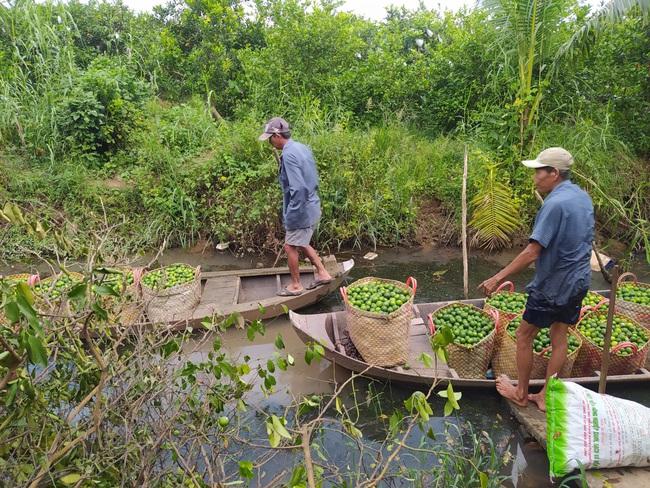 Đồng Tháp: Một ông nông dân kéo cả làng làm giàu nhờ trồng chanh cho quả trái vụ - Ảnh 4.