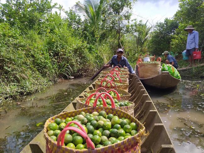 Đồng Tháp: Một ông nông dân kéo cả làng làm giàu nhờ trồng chanh cho quả trái vụ - Ảnh 5.