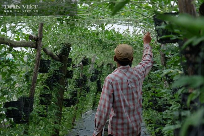 Trồng dưa hấu kiểu lạ, khách chỉ đến ăn tại vườn thu nửa tỷ mỗi năm - Ảnh 10.