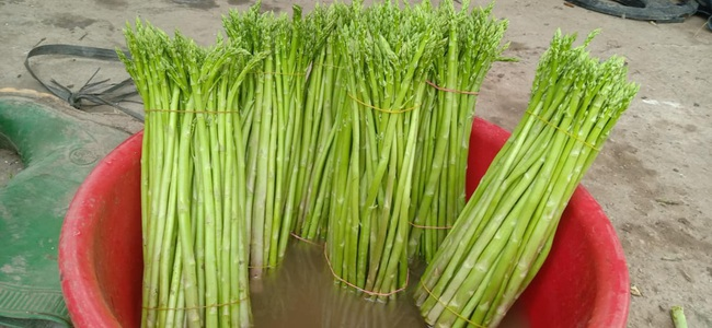 Liên kết chuỗi sản xuất măng tây thành công ở đất quan họ - Ảnh 2.