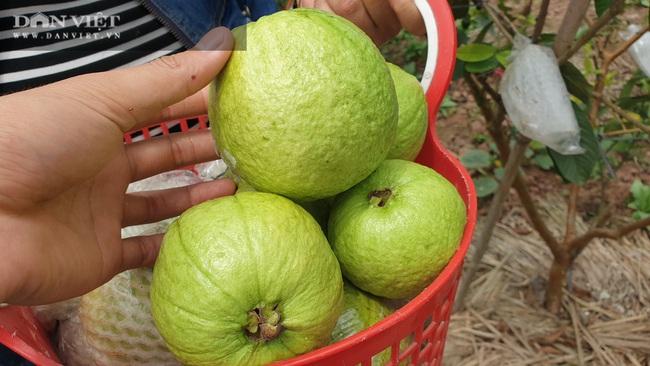 Thái Bình: Ngày bận thổi hồn cho gỗ, chiều chăm vườn cây ăn quả, 8x có thu nhập khủng   - Ảnh 3.