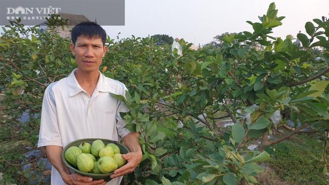Thái Bình: Ngày bận thổi hồn cho gỗ, chiều chăm vườn cây ăn quả, 8x có thu nhập khủng   - Ảnh 5.